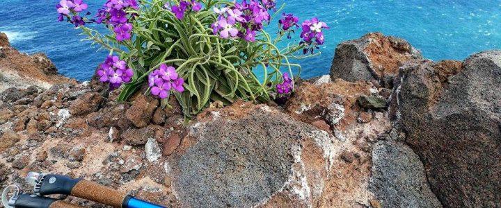Madeiros kelionę šiaurietišku žingsniu prisiminus